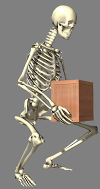 Skeleton lifting a box carefully, while keeping its back straight.
